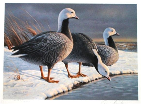 244-Daniel-Smith-Duck-Stamp